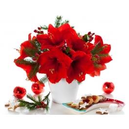 http://fleursetdesign.com/boutique/172-thickbox_choco/bouquet-d-amaryllis-fleurs-noel-livraison-bouguenais-fleurs-rouges.jpg