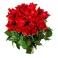 Brassée de 20 roses rouges