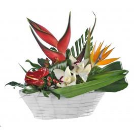 http://fleursetdesign.com/boutique/43-thickbox_choco/livraisons-fleurs-exotiques-composition-heliconia-strelizia-orchidee-cymbidium-hypericum-anthurium-bouguenais.jpg