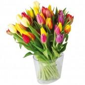 Brassée de 30 tulipes
