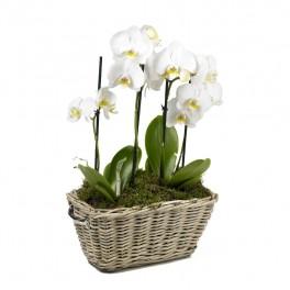 jardini re d 39 orchid es. Black Bedroom Furniture Sets. Home Design Ideas