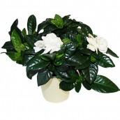 livraison de fleurs nantes et france en 24h plantes fleurs design. Black Bedroom Furniture Sets. Home Design Ideas