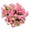 Bouquet de roses ramifiées