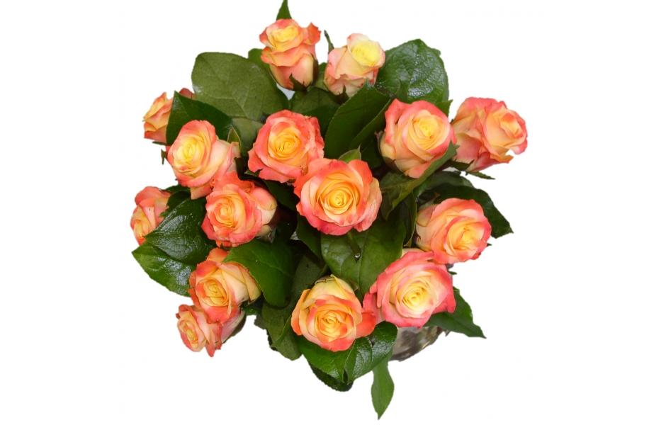 bouquet rond de 15 roses roses. Black Bedroom Furniture Sets. Home Design Ideas